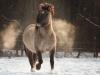 horses_5048efae091e5255133eab3c50c964e1
