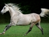 horses_69a6c704cfc15cbf7f65baf94df0afca