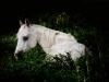 horses_99eb5c35dee37acd