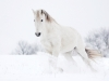 horses_b127201a29400097606f203a81642681
