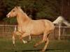 horses_cc6dcaad0e2633cdb22bacdcf36a5c2c
