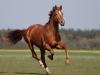 horses_wanjo_by_vadalein