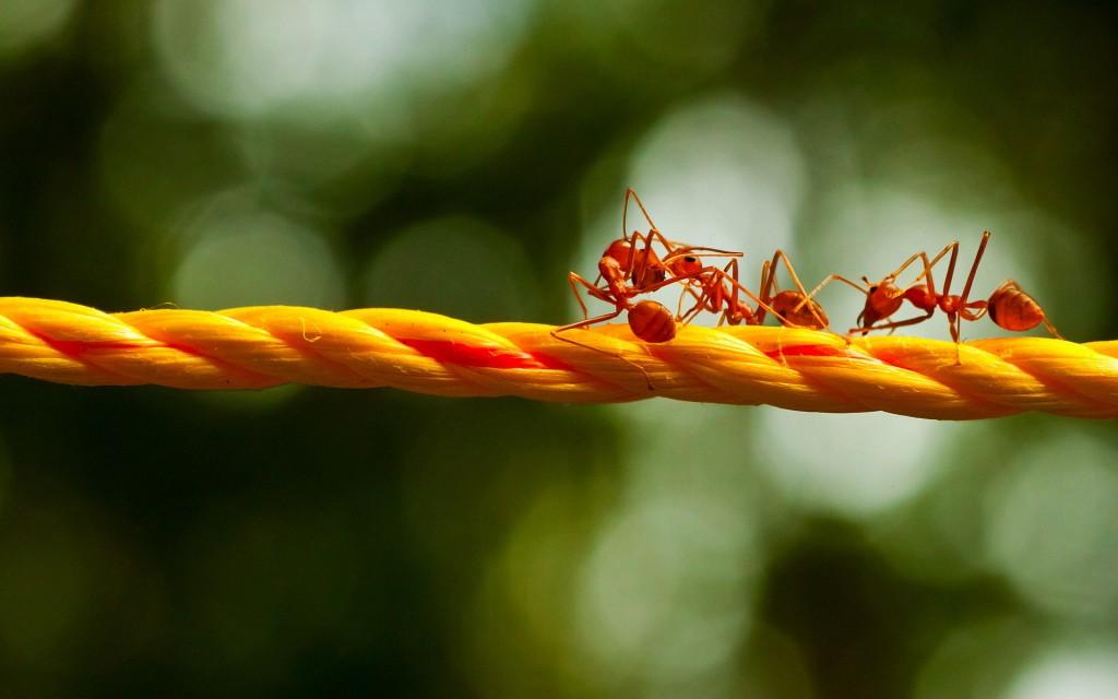 Роботов привлекли к изучению муравьиных ходов