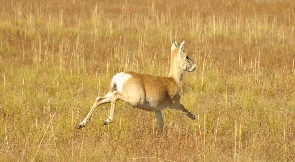 Модель броуновского движения помогает лучше понять поведение животных