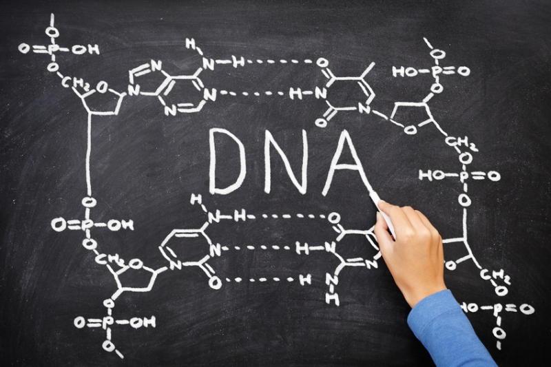 Учёные из Калифорнийского университета выявили большое количество ранее неизвестных РНК